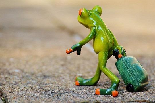 frog-897419_540